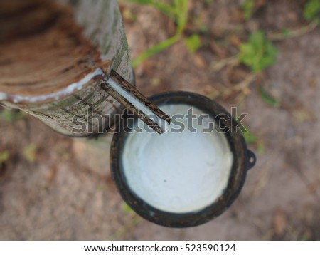Rubber Latex of rubber trees.