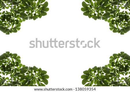 Rubber leaves background