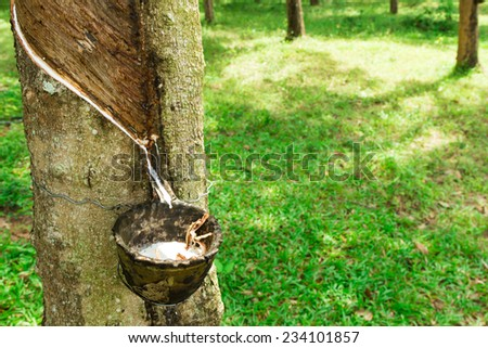 Rubber plantation, South East Asia