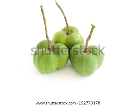 Rubber seeds and pods on white background