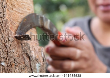 Rubber tree background, Thailand, Southeast Asia