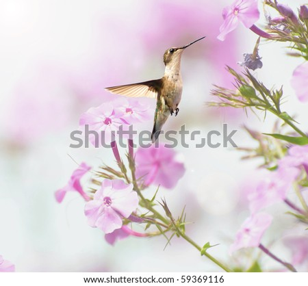 Ruby throated hummingbird in motion in the garden. - stock photo
