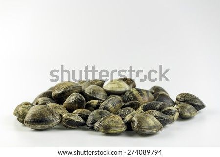 Ruditapes philippinarum, an edible species of saltwater clam, its a marine bivalve mollusk in the family Veneridae, the Venus clams. Harvest in South Portugal Atlantic cost. - stock photo