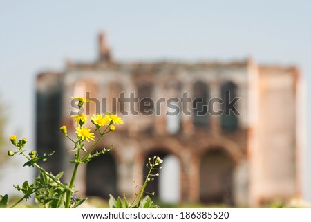 Ruined house with yellow flower  - stock photo