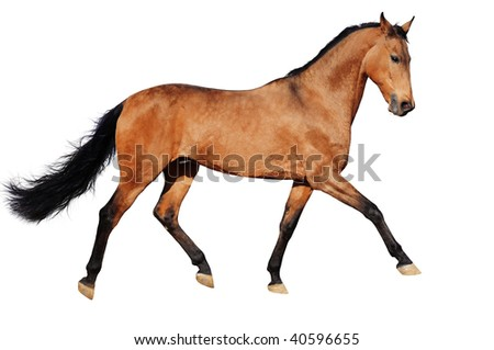 Running bay horse, isolated