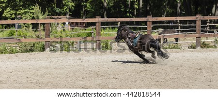 running black pony in ammunition for arena - stock photo