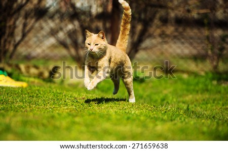 running cat - stock photo