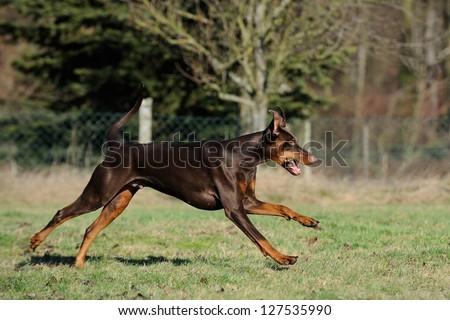 running dog - stock photo