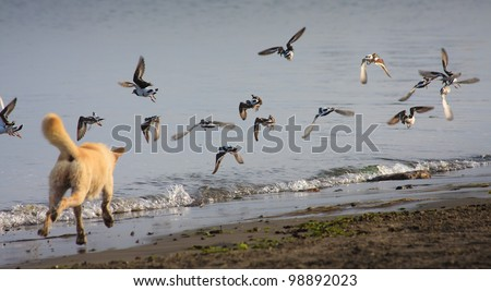 Running dog hunting birds