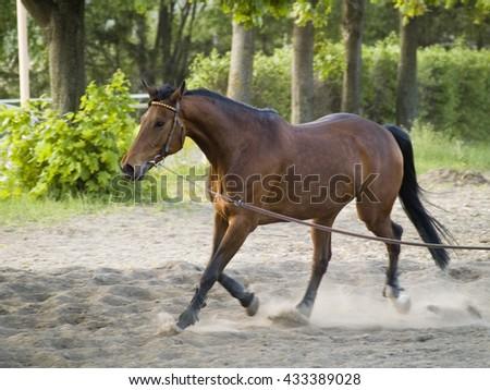 Running horse - stock photo