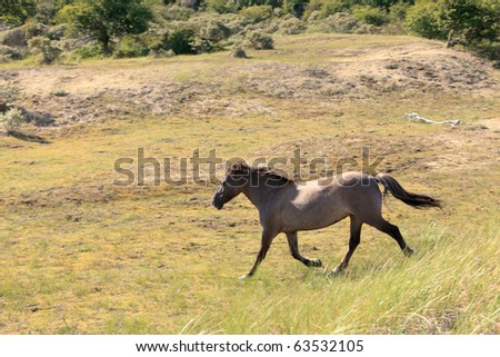 Running horse in dunes with grass