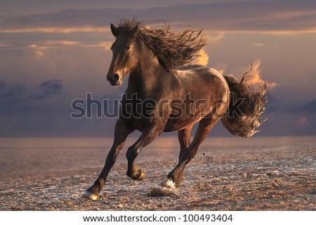 Running horse with streamed mane on sunset sandy beach - stock photo