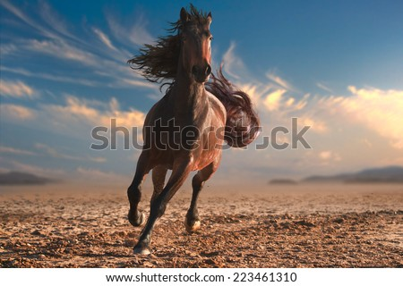 Running horse with streamed mane. Sunset time and sand - stock photo