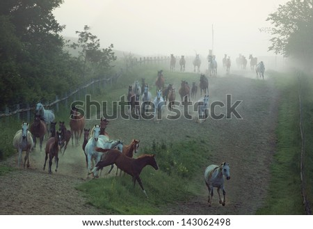 Running horses - stock photo
