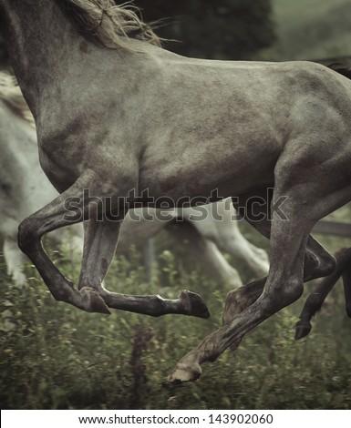 Running horses - stock photo