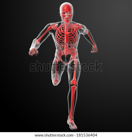 Running human anatomy by X-rays in red - front view