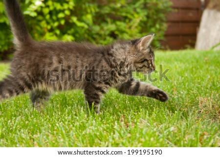 Running kitten - stock photo