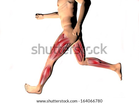 Running man muscles calf, thigh human body
