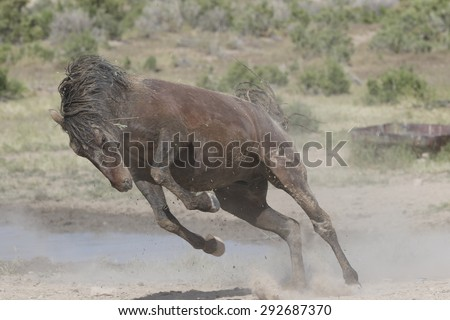 Running stallion in the Great Basin Desert Utah USA - stock photo
