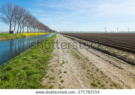 Rural area on a sunny day in spring with newly sown potatoes in long ridges and a row of bare trees reflected in the water of a canal with flowering yellow charlock on the waterfront. - stock photo