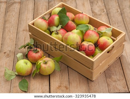 Rural autumn still life with  in box of apples on wooden table