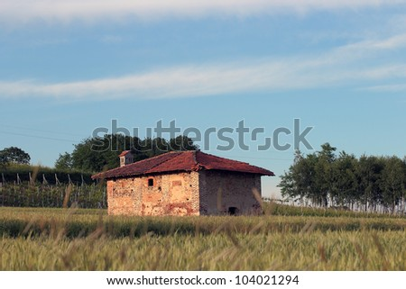 rural building, blurred spikes in the foreground and vineyard in the back