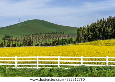 Rural coastal hills / mountains, blue sky, white clouds, green meadows, vineyards, power lines, yellow flowers, & white fence on the Big Sur coast, California Central Coast, near Cambria CA. - stock photo