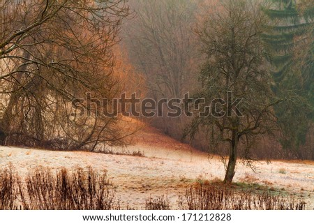 Rural Countryside in the Winter. Bavarian Hill Landscape. Hoar Frost on the Ground. Cold January. Barren Trees.