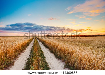 Rural Countryside Road Through Wheat Field. Yellow Barley Field In Summer. Agricultural Season, Harvest Time. Colorful Dramatic Sky At Sunset Sunrise.