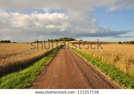Rural dirt road with golden wheat fields on either side. - stock photo