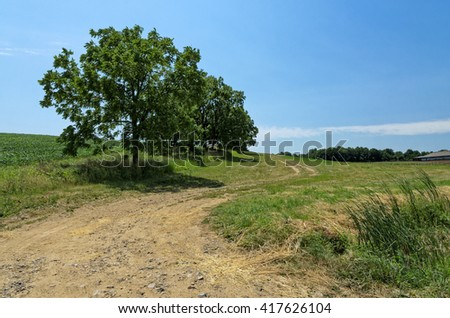 Rural Dirt Road with Walnut Tree Along Side of It with Copy Space - stock photo