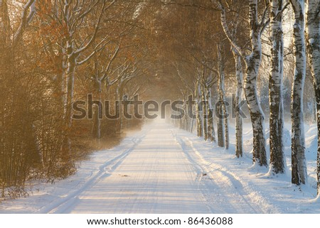 Rural farm road covered in snow with trees at the sides and fog in the distance. - stock photo