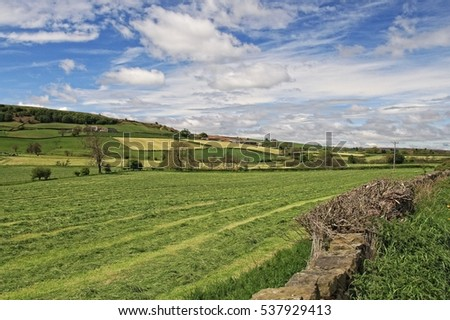 Rural farm view of the North York Moors in late May, 2016 with hills, fields, farms, cattle.