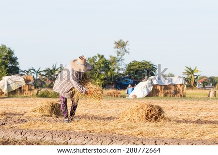 Rural farmer with haystack prepare for agriculture-15 - stock photo