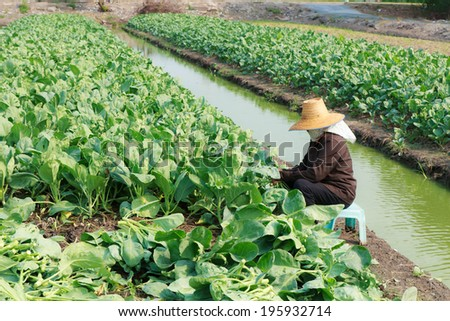 rural farmer working on the Vegetables field