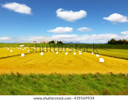 Rural field after harvest. Grass clippings packaged in white plastic bags. Far seen a farm with a red roof and a neat outbuildings - stock photo