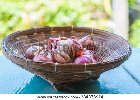 rural ingredient fresh garlic  - stock photo