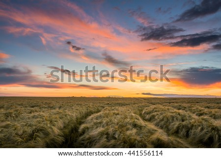 Rural landsape with beautiful sunset - Saxony, Germany.