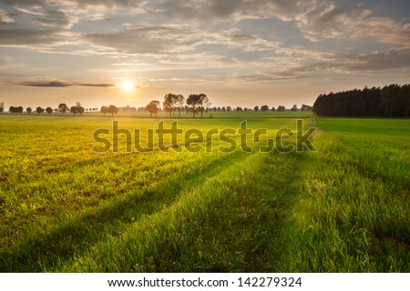 rural landscape. field and grass - stock photo