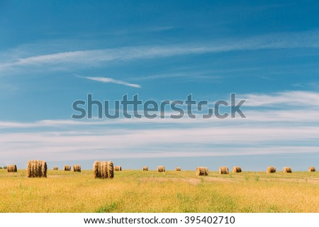 Rural Landscape Field Meadow With Many Hay Bales After Harvest in Sunny Day in Late Summer, Early Autumn. Blue Sky. - stock photo