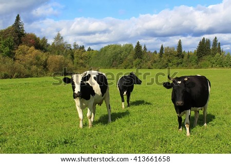 Rural landscape. Herd of cows on a green field in sunny day - stock photo