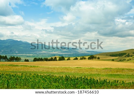 Rural   landscape in Georgia, with mountains and corn yellow field