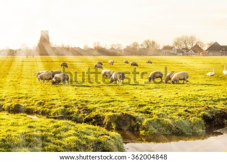Rural landscape in Holland - stock photo