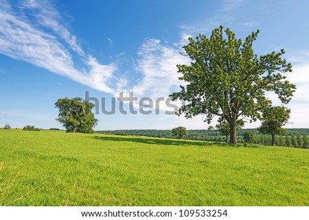 Rural landscape in summer