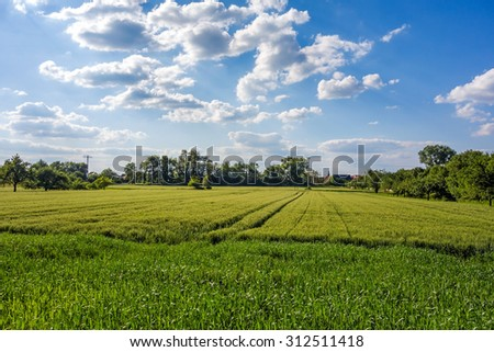 Rural landscape, meadow and corn field with trees in the background, blue sky with clouds - stock photo