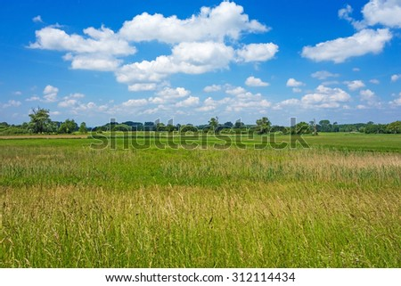 Rural landscape, meadow with forest in the background, blue sky with clouds - stock photo