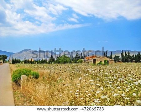 rural landscape north of Majorca, Spain with flower field, finca and tramuntana mountains in background