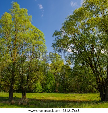 rural landscape of green trees on a meadow