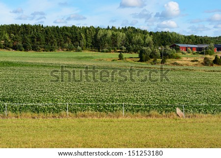 Rural landscape. Potato field - stock photo