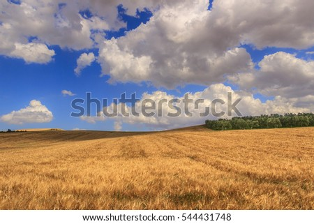 RURAL LANDSCAPE SUMMER.Between Apulia and Basilicata: hilly landscape with cornfield and olive grove dominated by clouds. ITALY.
